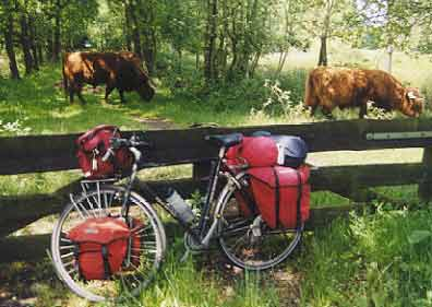 Cycling on the Veluwe